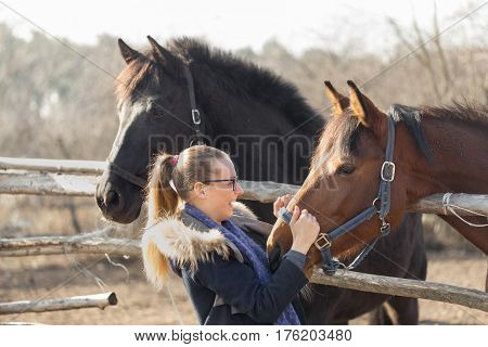 Girl Stroking A Thoroughbred Horse In The Pen For Paddock