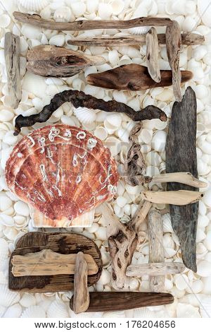 Scallop and seashell background with driftwood and a variety of white shells forming a background.
