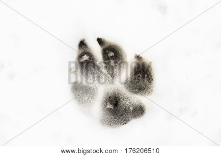 Dog foot print in the snow animal background
