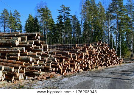 Pile of logs by the side of the road.