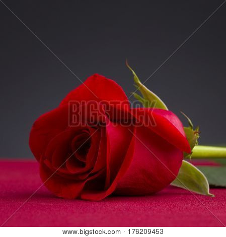 shot of a red rose over red table with dark background