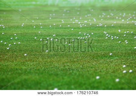 Golf balls at a driving range. Many golf balls lying on the green grass ground.