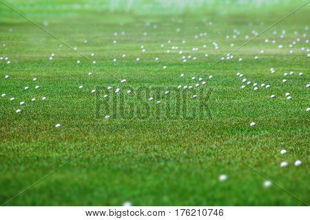 Golf balls at a driving range. Many golf balls lying on the green grass ground.
