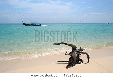 Picturesque snag lies on a white sand against the azure sea