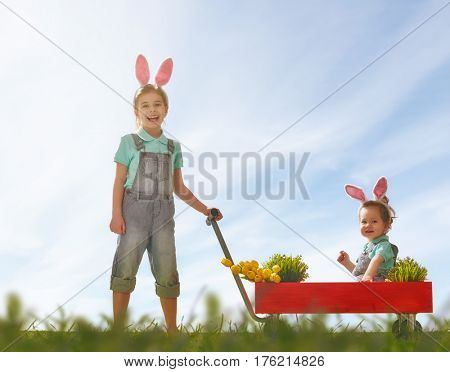 Two cute little children wear bunny ears and have Easter eggs. Girl carries her baby sister in kids wheel barrow on the lawn.
