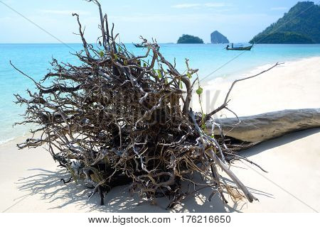 Picturesque driftwood lies on a white sand against the azure sea