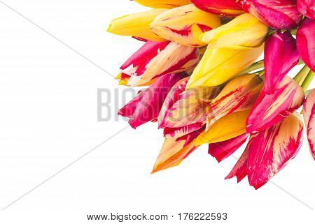 Colorful Tulipes