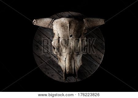 Cow/bull skull against old grey wood, with strong biker or viking vibes.