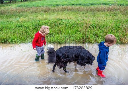 Two little boys in gumboots walking in a rain puddle with a dog