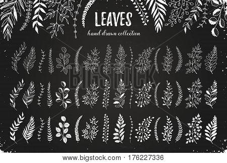 Leaves Hand Drawn