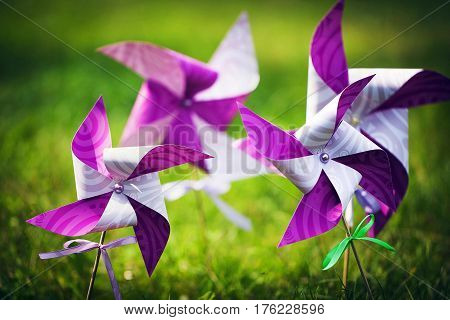Lilac-white pinwheel on green grass in summer