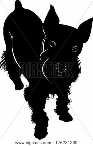 animal. miniature schnauzer. miniature dog . silhouette