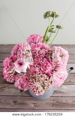 pink persian buttercup flowers. Curly peny ranunculus in Metallic gray vintage watering can, copy space