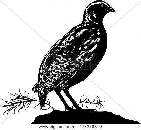 quail. bird quail. Vector silhouette of standing Common quail.