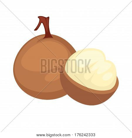 Longan exotic tropical fruit peeled to flesh. Vector flat isolated icon for juice or dessert label design