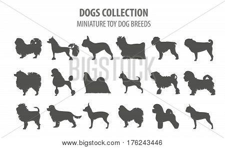 Dog Breeds_65