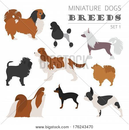 Dog Breeds_68