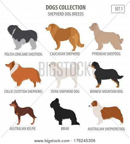 Dog Breeds_4