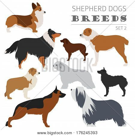 Collection Dog Hunting_24