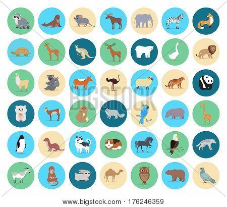 Domestic and wild animals in circles vector collection on white. Beige, green and blue round shapes with grey mouse and raccoon, koala with child, brow fox, striped tiger, white goose and bear etc.