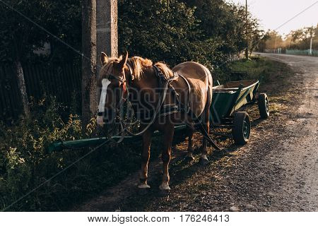 Horse Harness Reins In Carriage In Village Road Near Houses In Beautiful Sun Light In The Evening In