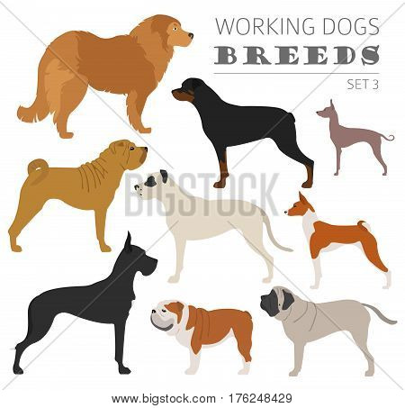 Collection Dog Hunting_47