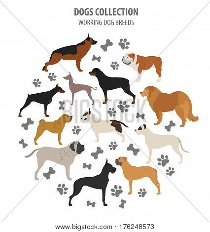 Collection Dog Hunting_44