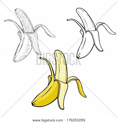 Vector Set of Different Illustration Style Peeled Bananas. Process of Drawing