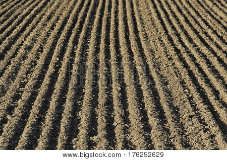View of furrows sowing on a field