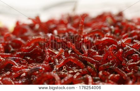 many small red mosquito larvae bloodworm is on the table