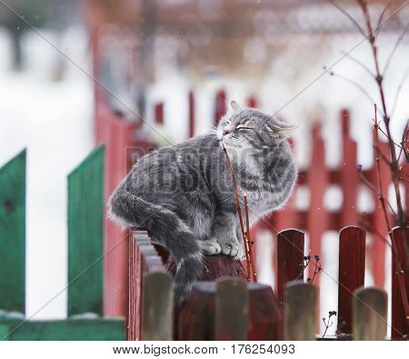 fondled cute cat sitting on the fence in the village in March