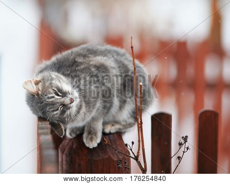 cute tabby kitten fondled on a wooden fence in the spring