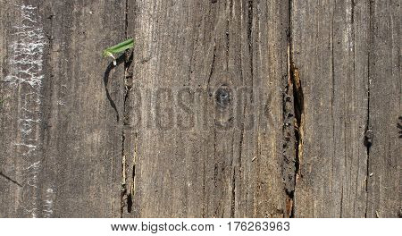 Aged wooden background. Horizontal image. Old surface