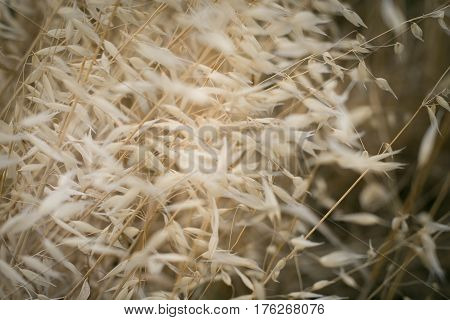 Summer blurred background. Dry flowers and spikelets grass in sun rays. Shallow dof.