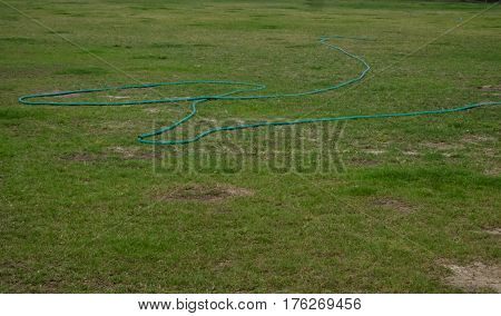 Curled rubber garden hose laying on grass Stretched across lawn