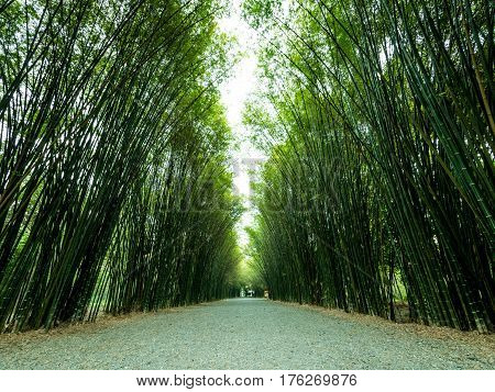 Tunnel bamboo trees and walkway Banna district Nakhonnayok province in Thailand.