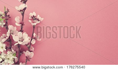 Blooming Sakura, Spring Flowers On Pink Background With Copy Space For Message. Greeting Card For Va