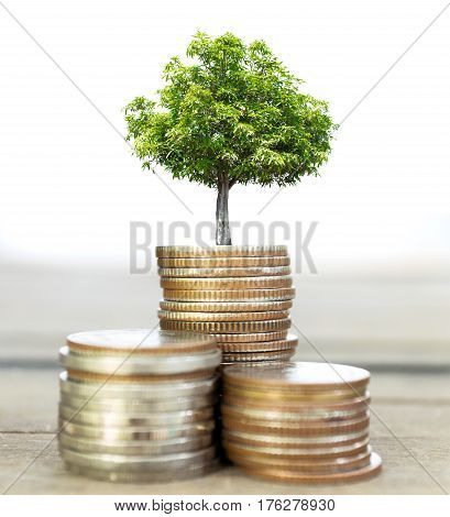 Selective focus of coins and big green plant growing Saving money Economy Investment and saving concept Abstract background. (Macro with blur and soft focus low light)