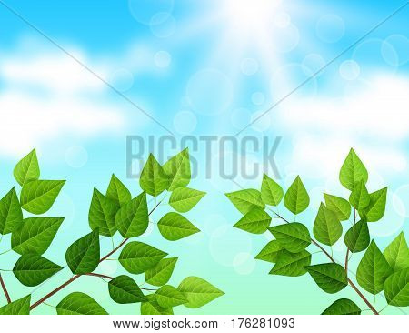 Ecology background with blue sky, branches, green leaves and sun shine. Vector illustration. Green backdrop with fresh spring foliage, sunbeams and white clouds.