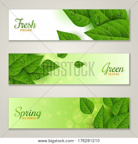 Horizontal banners with green leaves and water drops. Morning dew, fresh spring foliage. Vector illustration. Spring is coming concept