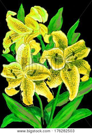 Yellow lilies on black hand painted picture watercolors.