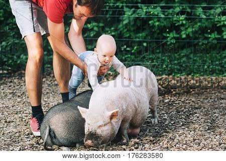 Family with kids in the petting zoo. Adorable baby feels delight emotions from communicating with animals. Big pig and little baby!