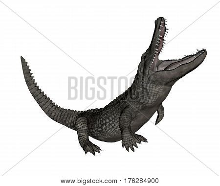 Crocodile roaring up isolated in white background - 3D render