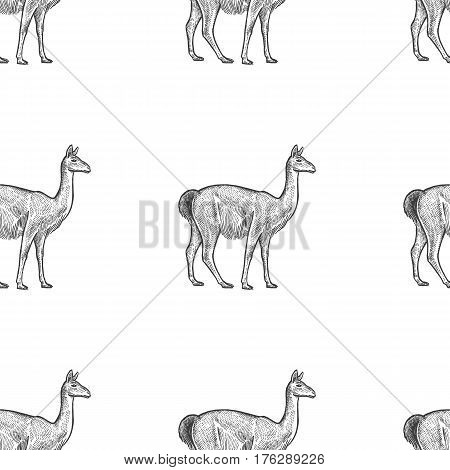 Guanaco. Seamless pattern with animals South America. Hand drawing of wildlife. Vector illustration art. Black and white. Old engraving. Vintage. Design for fabrics paper textiles fashion.