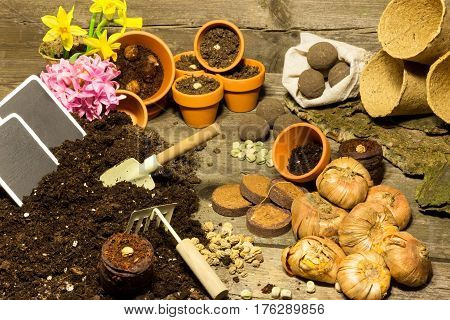 Compilation of various seeds flower pots and flower soil on a wooden table