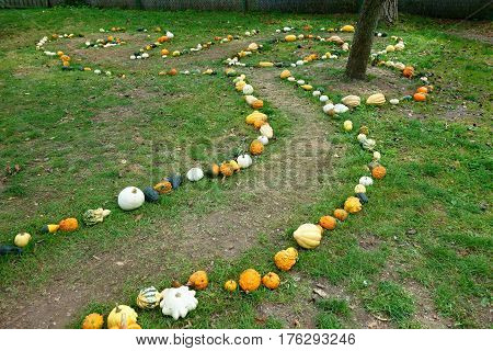 Exhibition of pumpkins in the backyard conceived as a path.