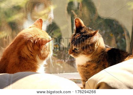 Two cats looking at each other in front of a large window showing their reflections in the glass.