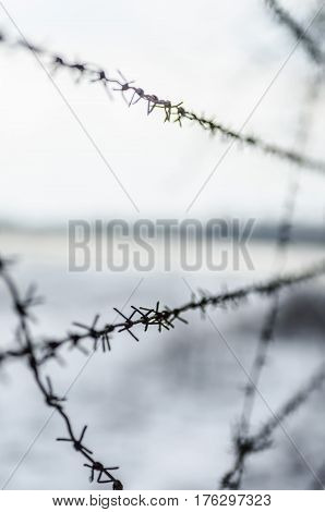 A fence of rusty barbed wire prevents penetration into a closed territory