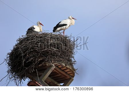 A White stork in the nest on the top of a roof