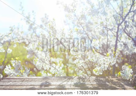 Branch Of Blossom Cherry On Aged Textured Boards Wood.